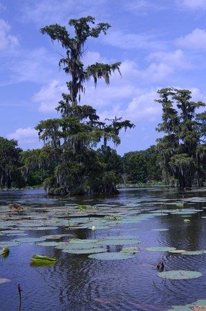 Champagne's Cajun Swamp Tours: Swamp tour