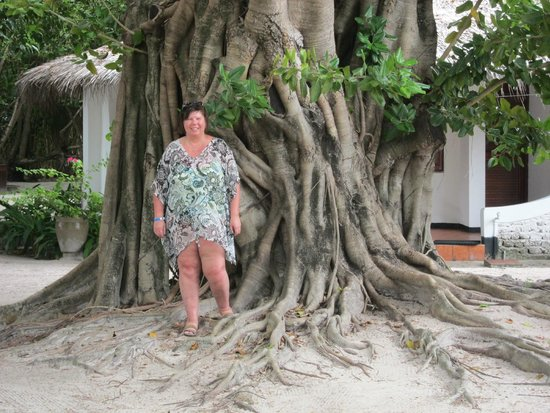 Velidhu Island Resort: Huge and ancient tree
