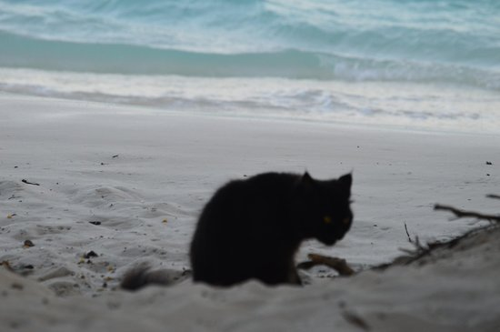 Velidhu Island Resort: Black cat