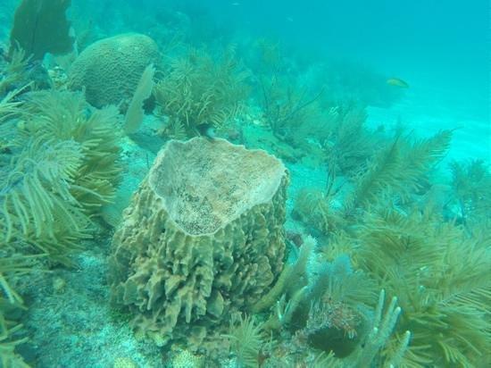 Sombrero Reef: reef at sombreo beach