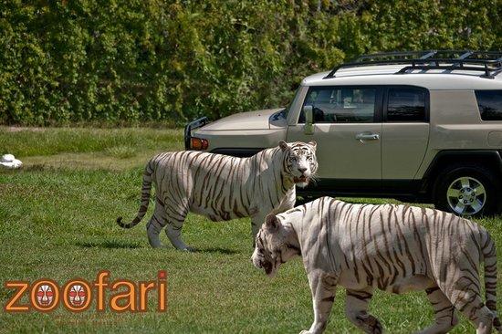 Resultado de imagen para zoofari