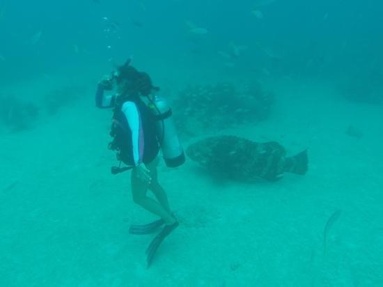 Looe Key (Florida Keys National Marine Sanctuary): yikes! She never saw the fish.