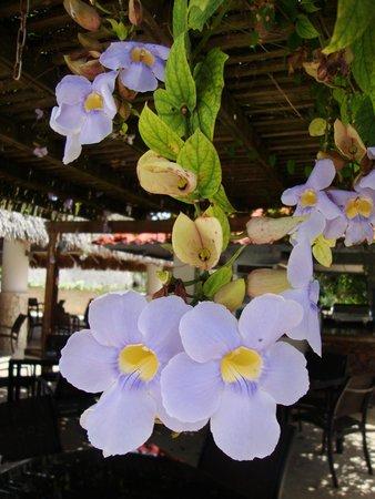 Viva Wyndham Dominicus Palace: pérgola en el bar Papaya