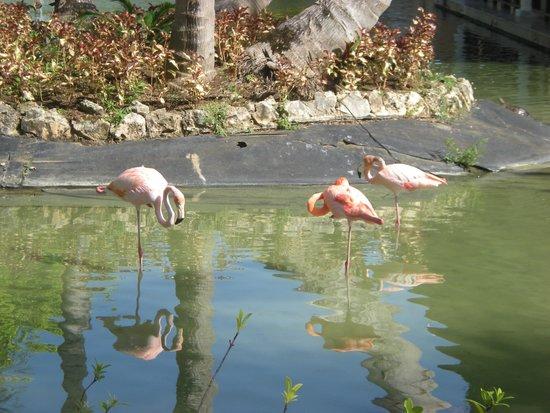 Catalonia Royal Bavaro: Flamingos at the sister resort!