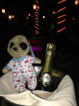The Grand Hotel Sharm El Sheikh: Oleg Mr Meerkat enjoying his Champagne