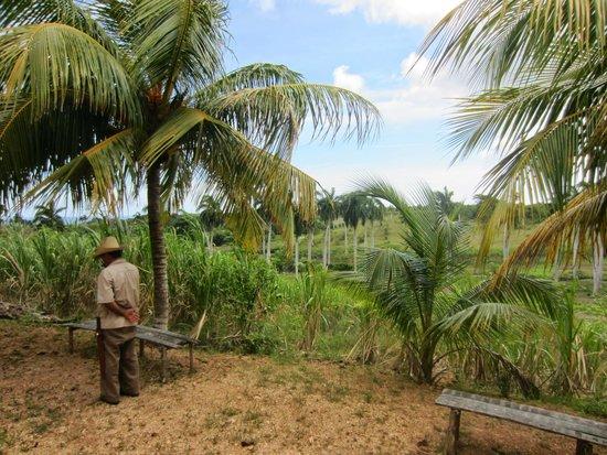 Hotel Playa Pesquero : A la ferme