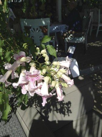 Jacqui O's BeachHouse : floral