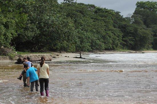 Cahuita National Park: Passage à gué de la rivière