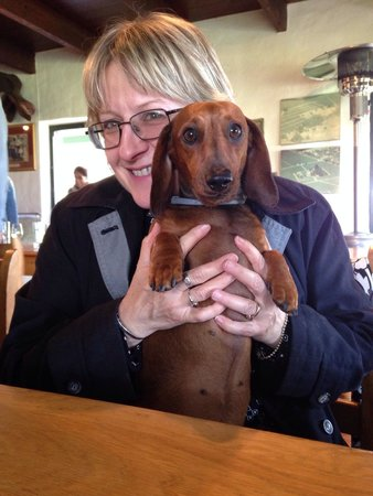 Middelvlei: Sweet little Grappa the dog!