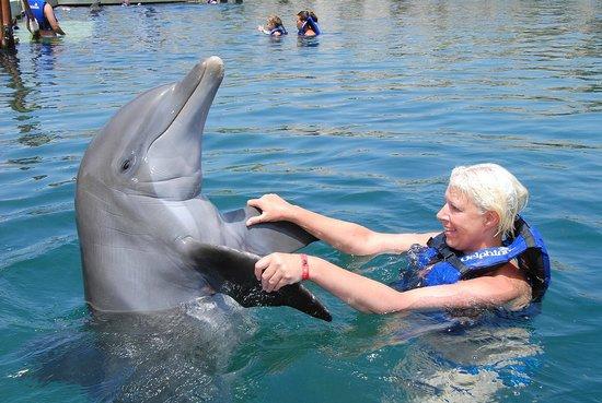 Delphinus Riviera Maya : hello paal