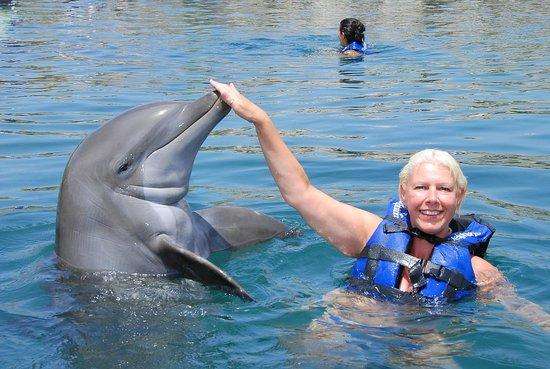Delphinus Riviera Maya : hi
