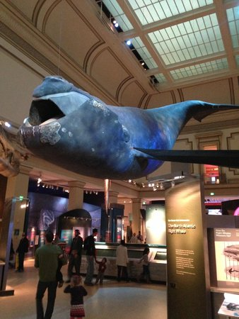 National Museum of Natural History: n the Museum