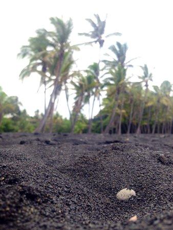 Punalu'u Black Sand Beach Park: Black sand beach
