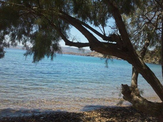 Walking in Patmos: Patmos sotto l'albero