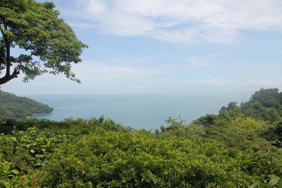 Tulemar Bungalows & Villas: Vue depuis notre bungalow