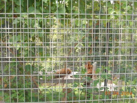 Turpentine Creek Wildlife Refuge, photo taken on walking tour