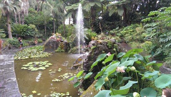 Giardini La Mortella: у фонтана, нижний сад