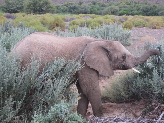 Sanbona Game Reserve - Gondwana Lodge: Elephants on our game drive