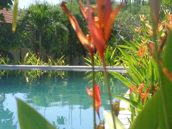 Casa Asia : Piscine et jardin bien fleuri