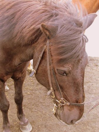 Ishestar Horse Riding Tours: My Horse, Rapp (Raven)