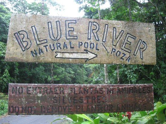 Blue River Resort & Hot Springs: vers les marches donnat sur la Rivière Bleue