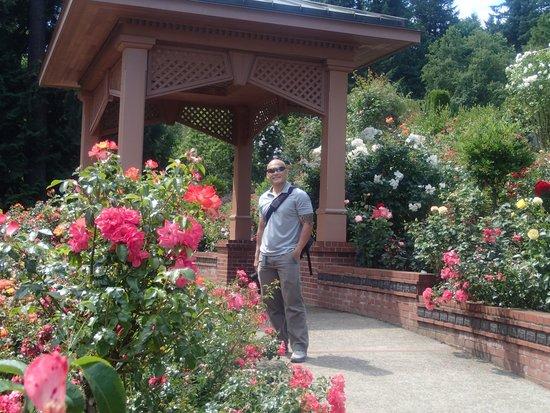 International Rose Test Garden: Roe Garden