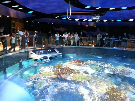Le Niveau 4 Picture Of New England Aquarium Boston Tripadvisor