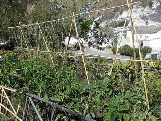Museo Cuevas del Sacromonte: The botanical garden