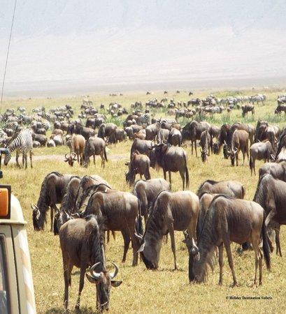 Ngorongoro Crater: A breathtaking Moment