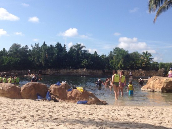 Discovery Cove: The dolphin encounter pool area