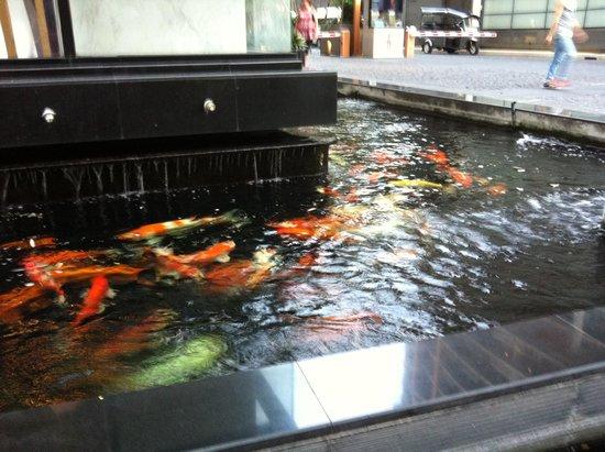 AETAS bangkok: fish feeding at the Aeta's hotel