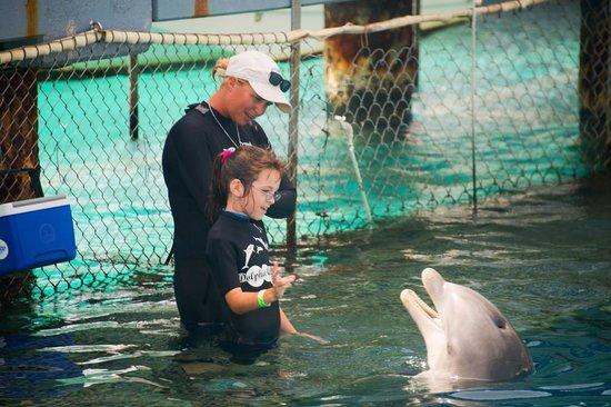 Dolphin Academy Curacao: Cori practicing hand signals with Caiyo.