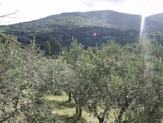 Oasi Sacro Cuore: vista dal balcone
