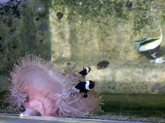 ศูนย์อนุรักษ์พันธุ์เต่าทะเล กองทัพเรือ