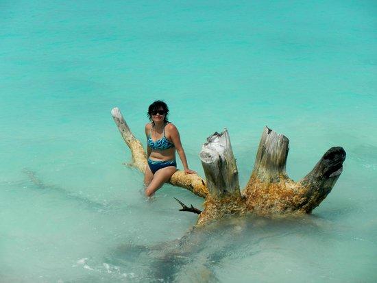Playa Paraiso: caminando por la playa un arbol en la orilla para una foto