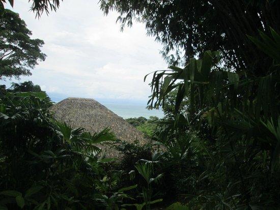 Lapa Rios Ecolodge Osa Peninsula: Bungalow roof