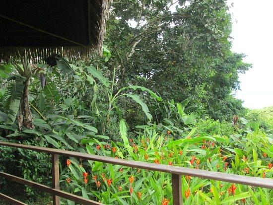 Lapa Rios Ecolodge Osa Peninsula : View grom Bungalow