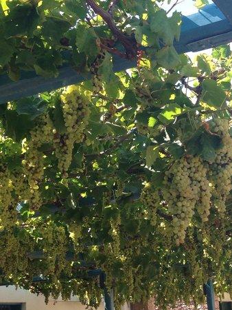 Kernos Beach Hotel : И еще...виноград
