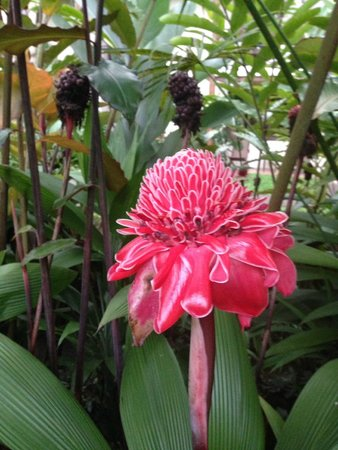Casa Luna Hotel & Spa : beautiful flora around property