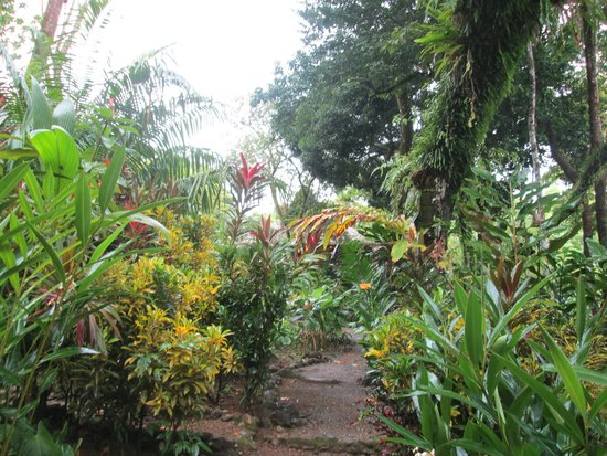 Copa de Arbol Beach and Rainforest Resort: garden