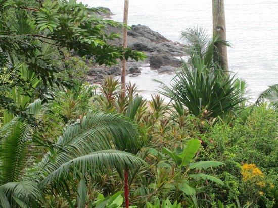 Copa de Arbol Beach and Rainforest Resort: View from #9 Balsa Bungalow