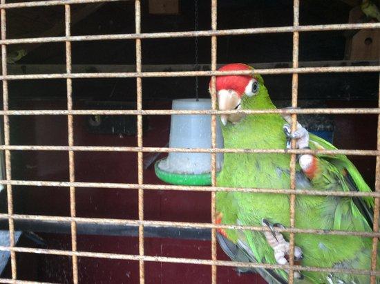 Glendeer Pet Farm: Animals