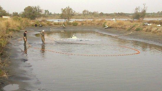 Les Poissons D'argent : on tire sur le filet pour attraper les poissons