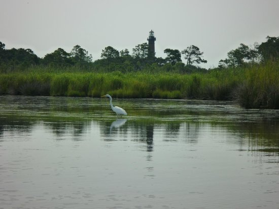 Coastal Explorations: View of an egret from my kayak.