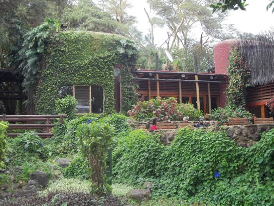 Amboseli Serena Safari Lodge: Dining room from the back
