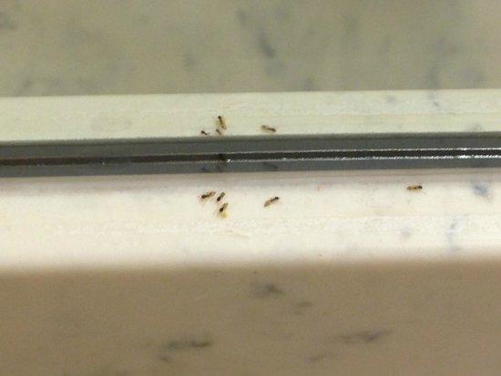 BEST WESTERN PLUS Deerfield Beach Hotel & Suites: Bugs in the bathroom