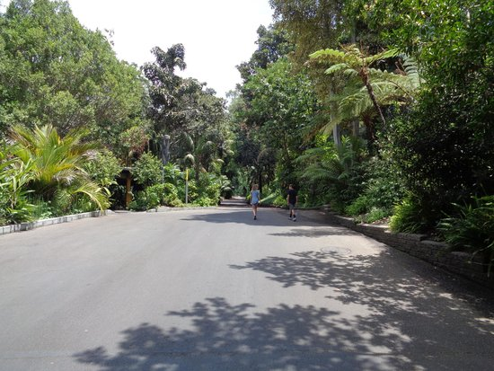 San Diego Zoo : one of the wide paths between features of the zoo