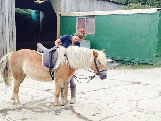 Woolacombe Riding Stables: ginger