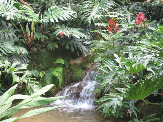 Butterfly Rainforest: Waterfall in the rainfaorest