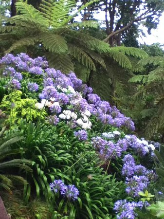 TUI SENSIMAR Savoy Gardens: Monte Palace